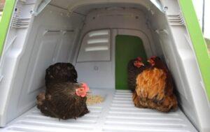 nichoir confortable poules